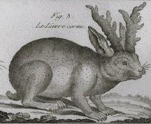 Кролень