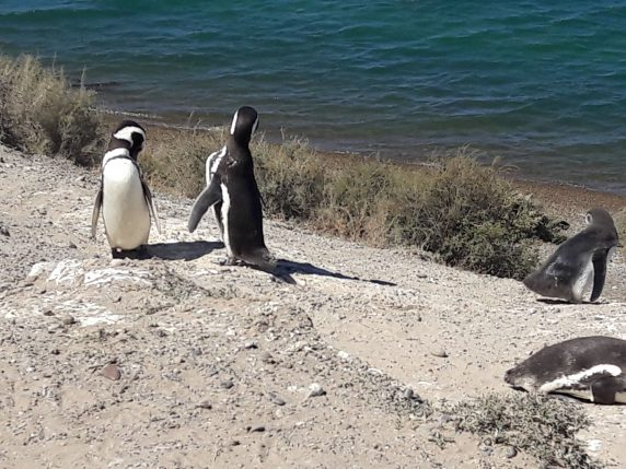 pinguin_02