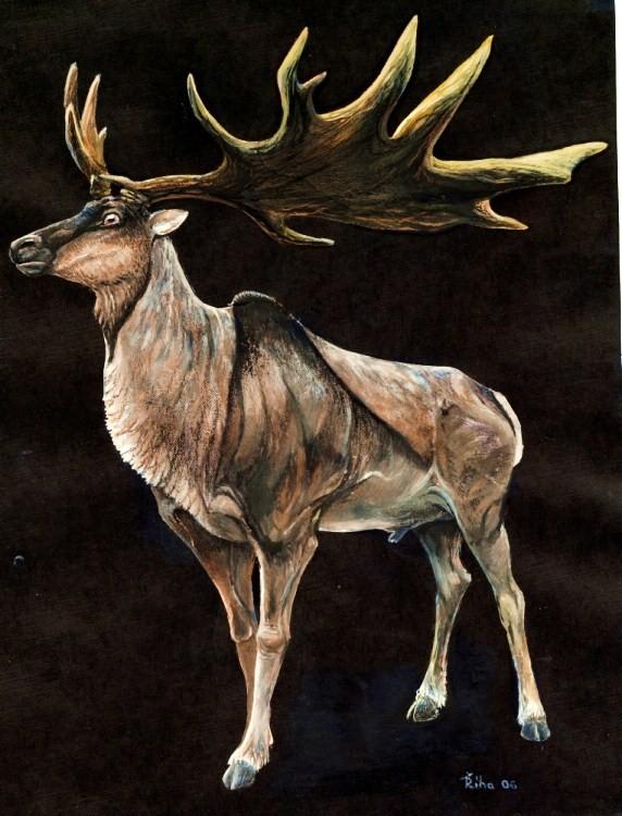 Большегорий олень — он же Ирландский лось